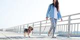愛犬、ペットと旅行。お留守番より、一緒に泊まれるホテルを宮古島で