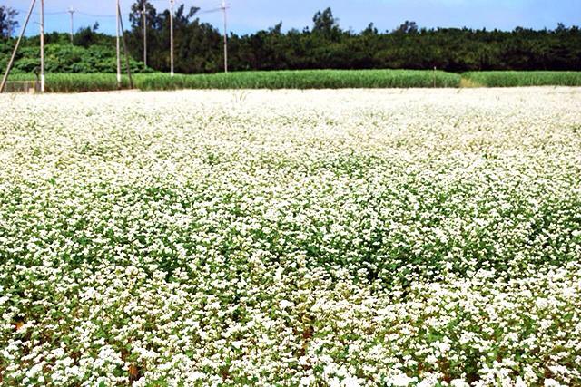 自家製そばには宮古島で育てられた無農薬のそば粉