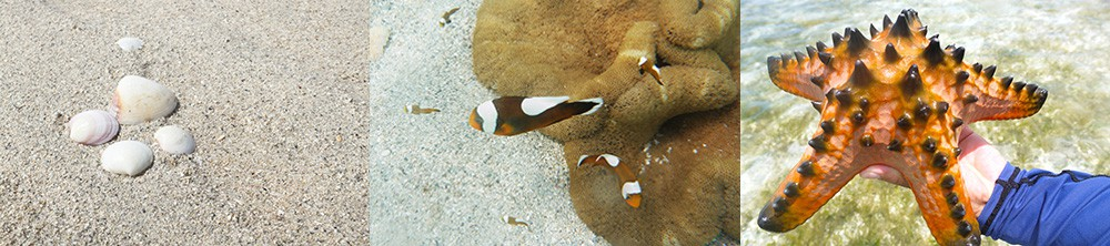ユニの浜散策で出会った海の生物