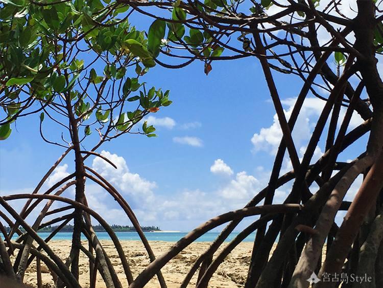 宮古島マングローブの根