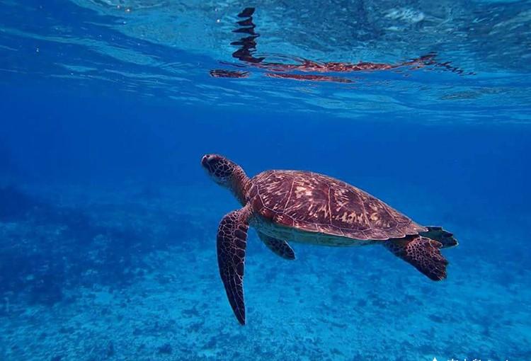 宮古島でウミガメに会おう!