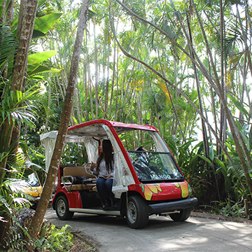 熱帯果樹園カートツアー