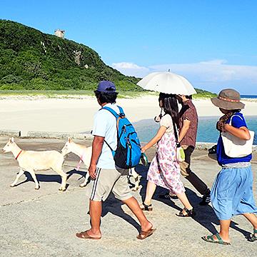 来間島「やぎさんぽ」まち歩き「ぬか~ぬか散歩」