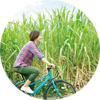 ゆっくりサイクリング